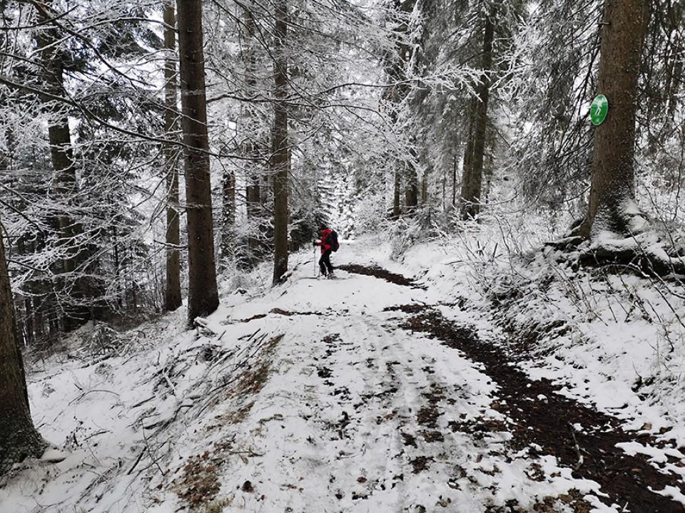 Scheinbergspitze